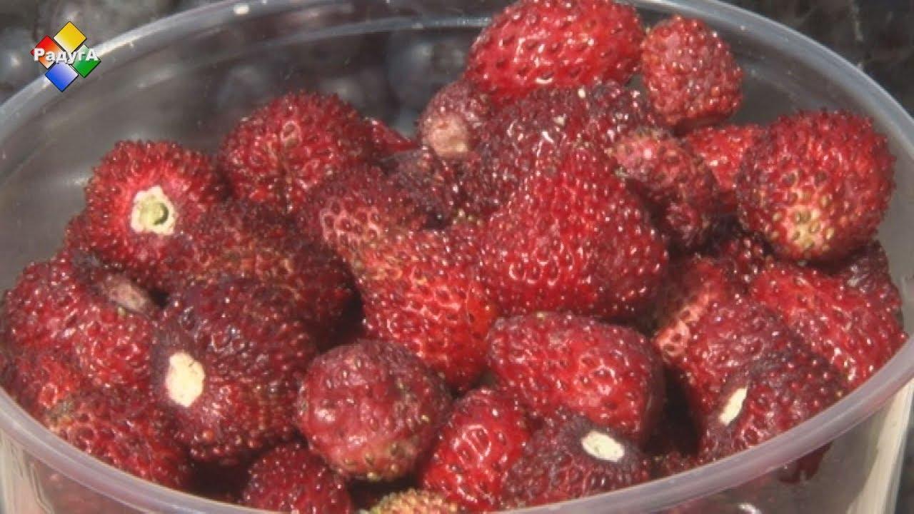 Все «за» и «против» продажи ягодной продукции