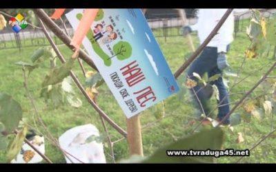 Павловопосадцы посадили своё дерево