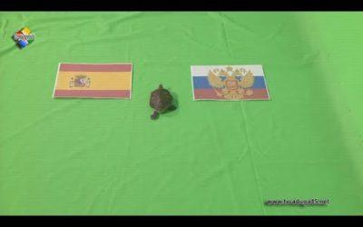 Павловопосадцы делают прогнозы на предстоящий матч России и Испании на ЧМ по футболу