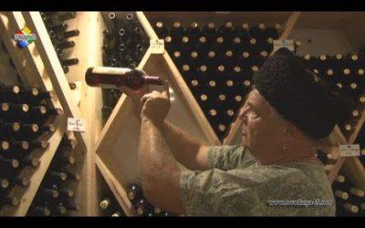 Игорь Кузьмин выращивает 265 видов винограда