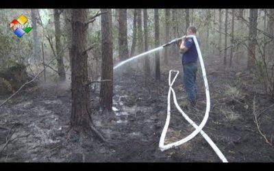 На ликвидацию лесного пожара в Павловском Посаде брошены все силы