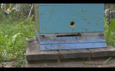 Пчеловод Алексей Бубенок собирает правильный мед