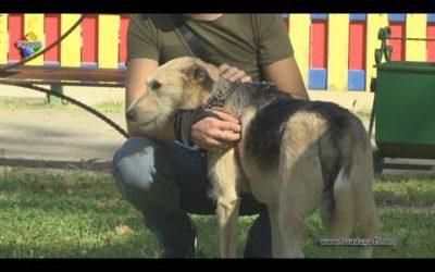 Зоозащитники Павловского Посада провели в Городском парке выставку бездомных животных