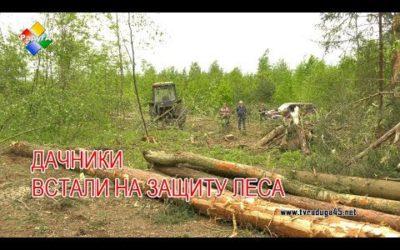 """Лес рубят щепки летят. Дачники СНТ """"Мечта"""" встали на защиту леса вокруг товарищества"""