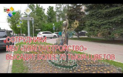 Сотрудники МБУ «Благоустройств»о высадят на клумбы города более 70 тысяч цветов