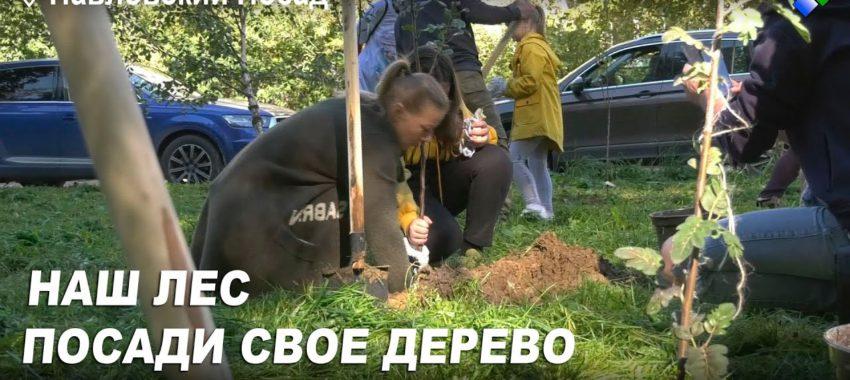 Более 500 саженцев высадили в Павловском Посаде